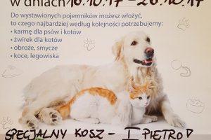 Akcja pomocy zwierzakom rozpoczęta